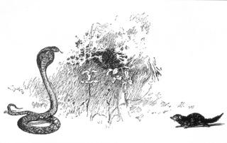 Mongoose and cobra